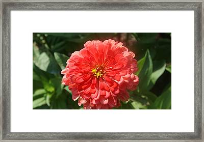 Orange Macro Poof. Framed Print by Rob Luzier