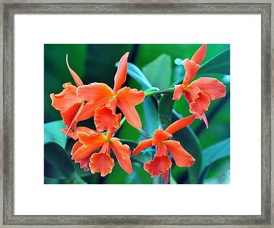 Orange Perfection Framed Print by Gail Butler