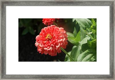 Orange Poof Framed Print by Rob Luzier