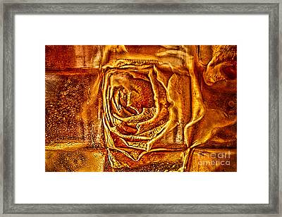 Orange Rose Framed Print by Omaste Witkowski