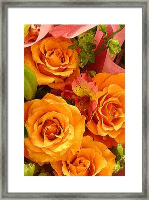 Orange Roses Framed Print by Amy Vangsgard