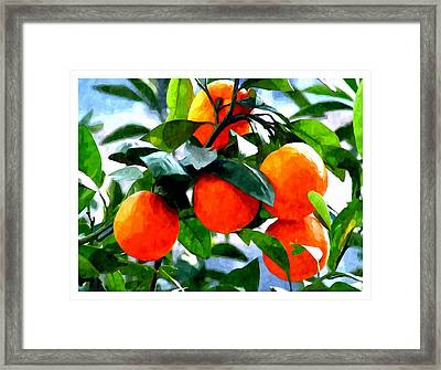 Orange Tree In Springtime  Framed Print by Lanjee Chee
