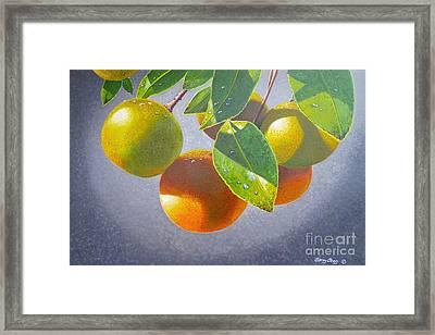 Oranges Framed Print by Carey Chen