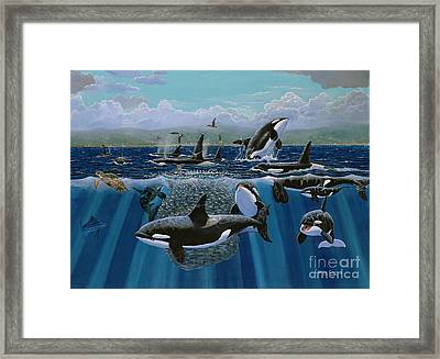 Orca Play Re009 Framed Print by Carey Chen