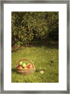 Orchard Framed Print by Amanda Elwell
