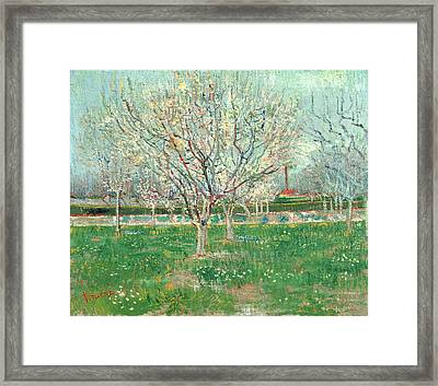 Orchard In Blossom, 1880  Framed Print by Vincent van Gogh