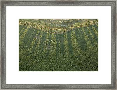 Orchard Row Of Poplar, Archigny Framed Print by Laurent Salomon