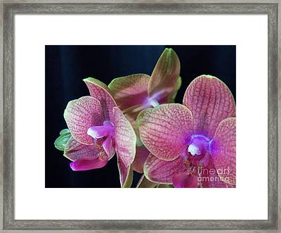 Orchid 2 Framed Print by Judy Via-Wolff