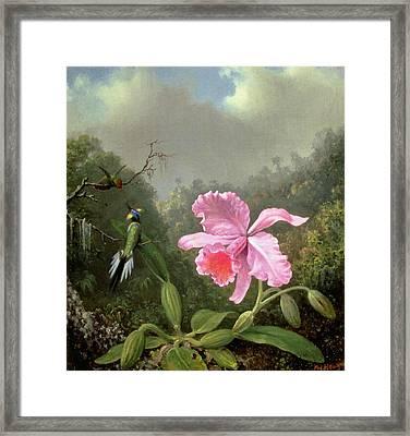 Orchid And Hummingbirds Framed Print by Martin Johnson Heade