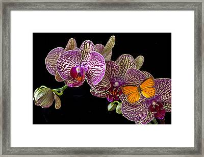 Orchid And Orange Butterfly Framed Print by Garry Gay