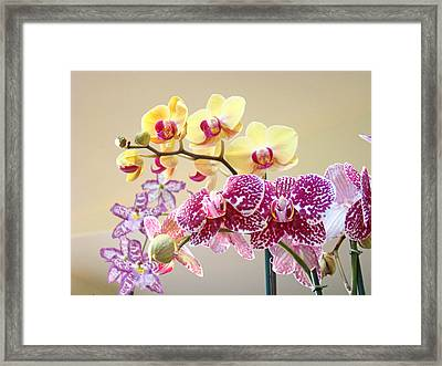 Orchid Art Prints Orchids Flowers Floral Bouquets Framed Print by Baslee Troutman