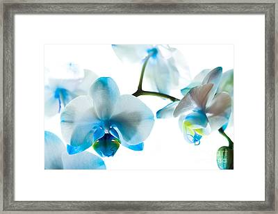 Orchid Closeup Framed Print by Boon Mee