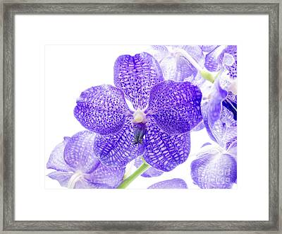 Orchid Flower Framed Print by Boon Mee