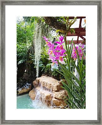 Orchid Garden Framed Print by Carey Chen