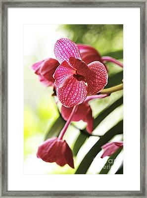 Orchid II Framed Print by Pamela Gail Torres