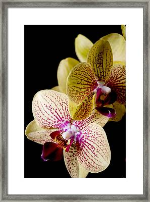 Orchid Framed Print by Ivete Basso Photography
