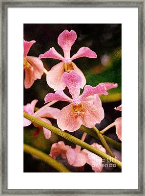 Orchid Number 17 Framed Print by Floyd Menezes