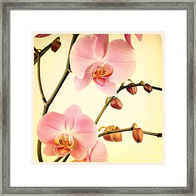 Orchid Old Photo Framed Print by Jane Rix