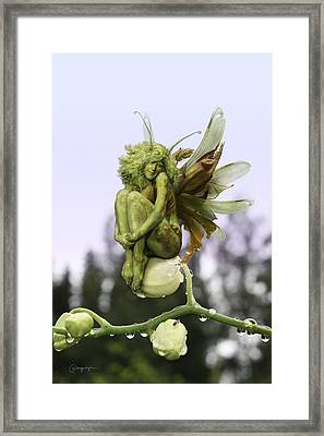 Orchid Pixie Framed Print by Cassiopeia Art