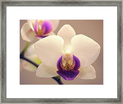 Orchid Framed Print by Rona Black