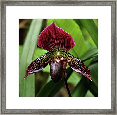 Orchid Framed Print by Sandy Keeton