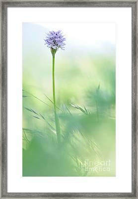 Orchid Framed Print by Simona Ghidini