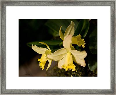Orchid Sunshine Framed Print by Joanne Smoley