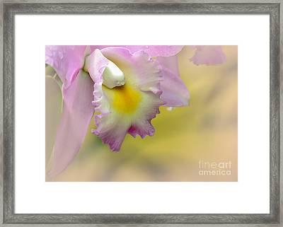 Orchid Whisper Framed Print by Sabrina L Ryan