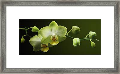 Orchids Framed Print by Marc Huebner