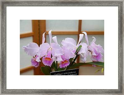 Orchids - Us Botanic Garden - 011315 Framed Print by DC Photographer