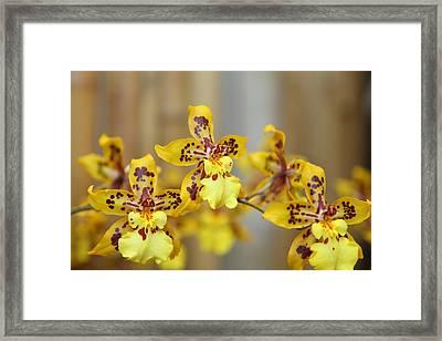 Orchids - Us Botanic Garden - 011345 Framed Print by DC Photographer