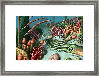 Ordovician Period Scene Framed Print by Spencer Sutton