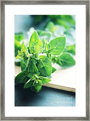 Oregano Framed Print by HD Connelly