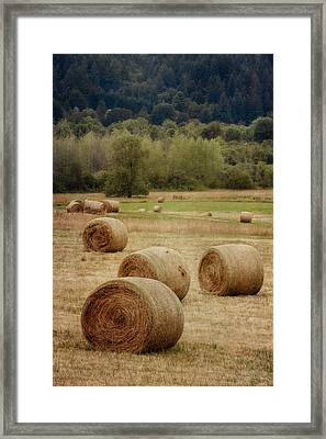 Oregon Hay Bales Framed Print by Carol Leigh