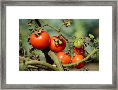 Organic 2 Framed Print by Fraida Gutovich