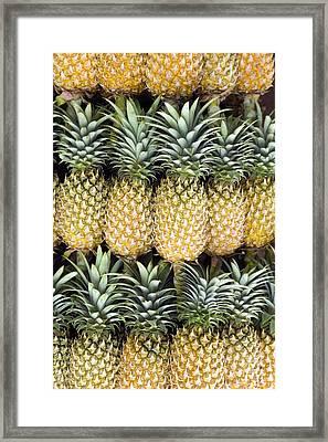 Organic Pineapple  Framed Print by Kevin Miller