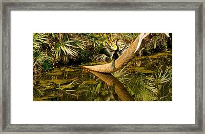 Oriental Darter Anhinga Melanogaster Framed Print by Panoramic Images