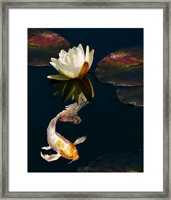 Oriental Koi Fish And Water Lily Flower Framed Print by Jennie Marie Schell
