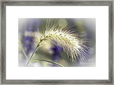 Ornamental Sweet Grass Framed Print by Heiko Koehrer-Wagner