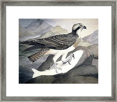 Osprey, 19th Century Framed Print by Science Photo Library