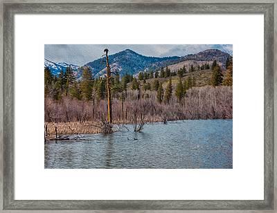 Osprey Nest In A Beaver Pond Framed Print by Omaste Witkowski