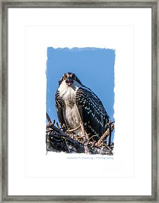 Osprey Surprise Party Card Framed Print by Edward Fielding