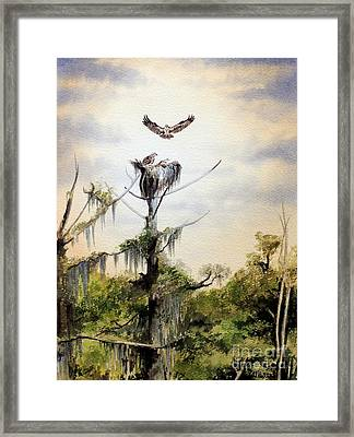 Ospreys Nesting Wakulla River Framed Print by Bill Holkham