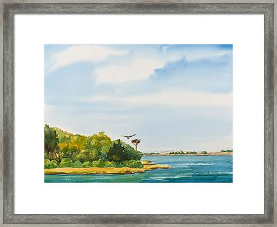 Ospreys On The Vineyard Watercolor Painting Framed Print by Michelle Wiarda