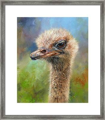 Ostrich Framed Print by David Stribbling
