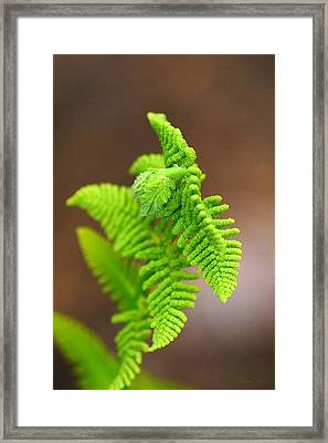 Ostrich Fern Framed Print by Christina Rollo