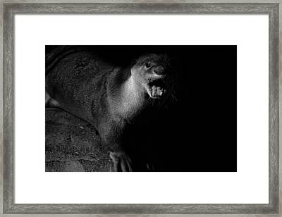 Otter Wars Framed Print by Martin Newman