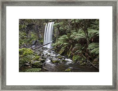 Otway Beauty Framed Print by Shari Mattox