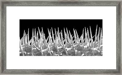 Ouch Framed Print by Sabrina L Ryan