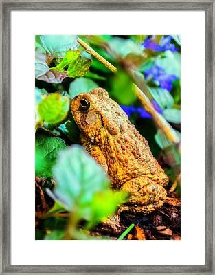 Our Backyard Visitor Framed Print by Jon Woodhams